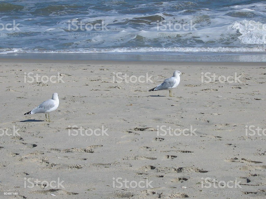 Seagulls on the Shore royalty-free stock photo