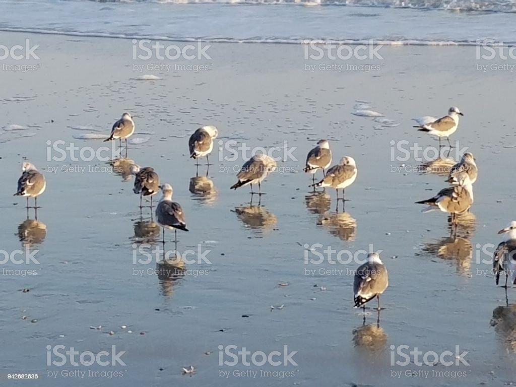 Seagulls on the shore stock photo