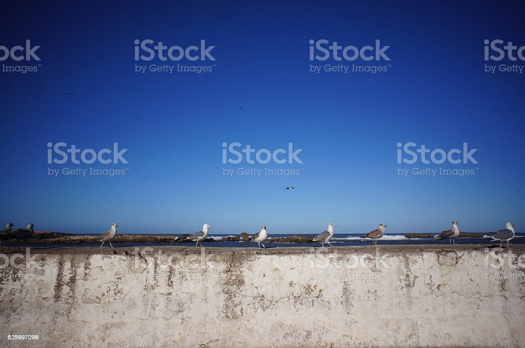 seagulls on the wall stock photo