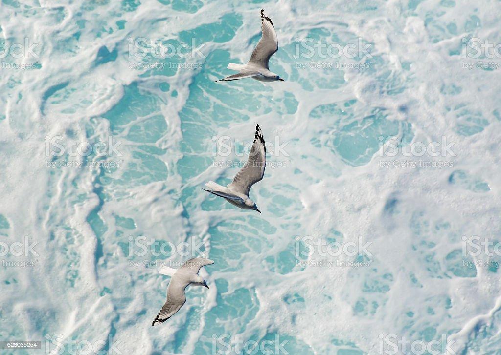 Mouettes sur l'océan - Photo