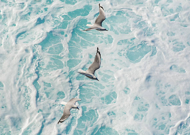Seagulls over the ocean