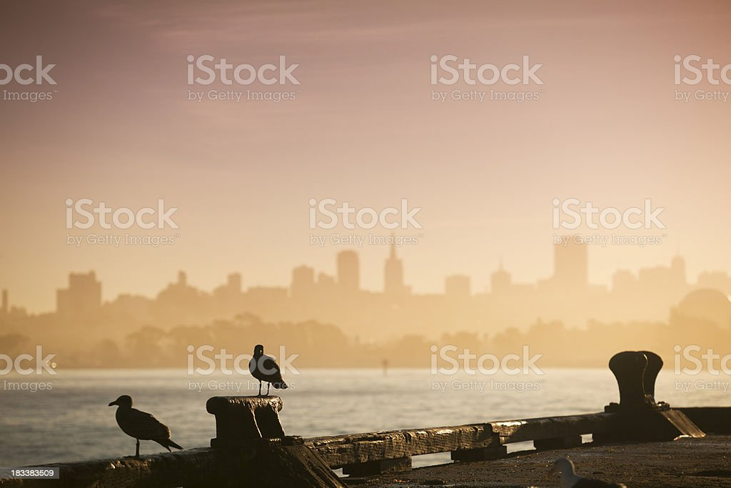 Seagulls overlook the San Francisco skyline royalty-free stock photo
