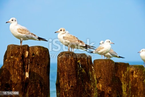 Gulls resting on the breakwaters. Baltic sea area in Poland.