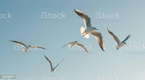 Seagulls picture id534050814?b=1&k=6&m=534050814&s=612x612&h=0tfemk07qythaqmhxxywhsplvb0kvqgwx 5 ll d0oo=