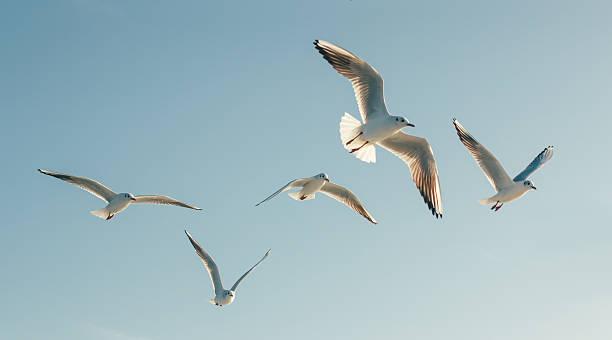gaviotas - pájaro fotografías e imágenes de stock