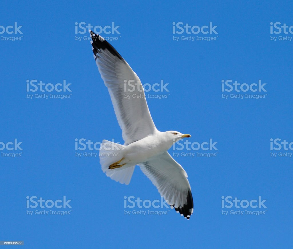 Seagulls. royalty-free stock photo