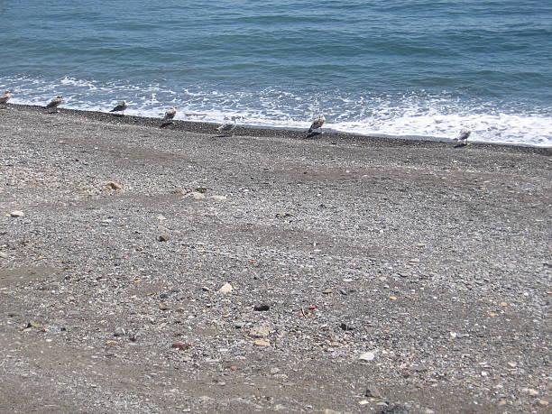 Seagulls stock photo