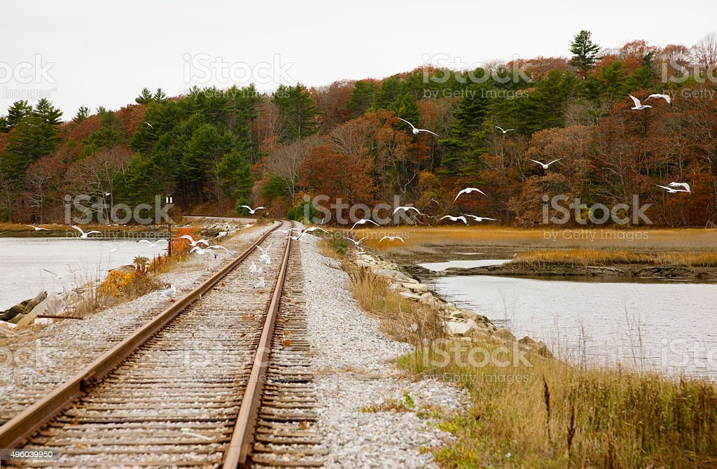 Seagulls, railroad tracks, autumn forest and New England stock photo