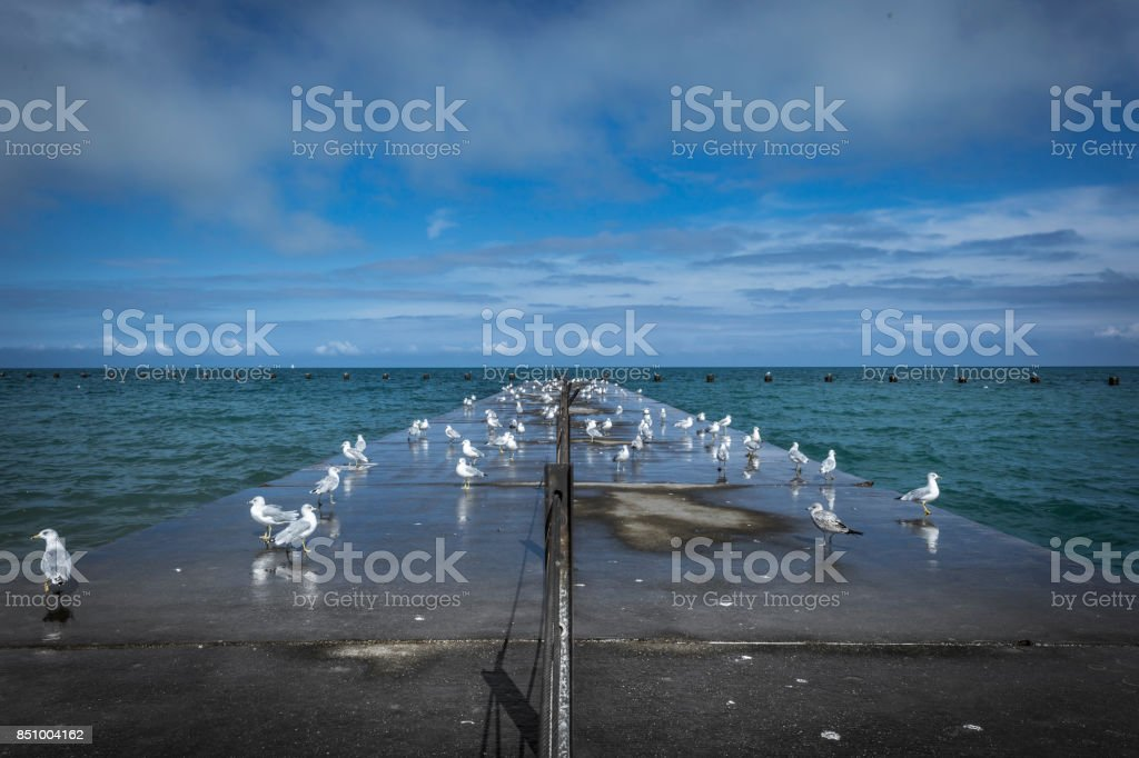 Seagulls resting on pier with blue sky stock photo