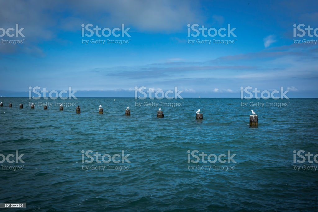 Seagulls resting on wooden posts in a lake stock photo