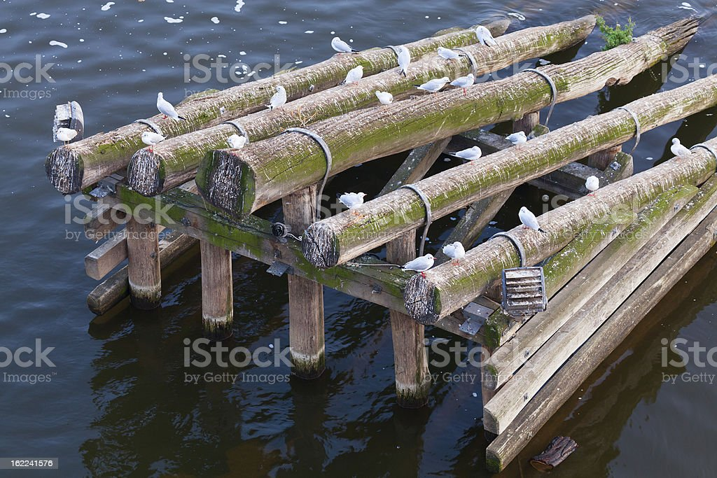 Seagulls Resting royalty-free stock photo