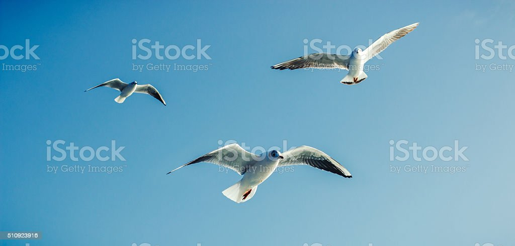 Seagulls - Sea Birds stock photo