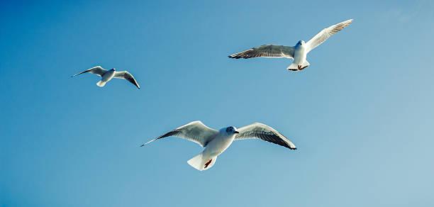Seagulls - Sea Birds stock photo