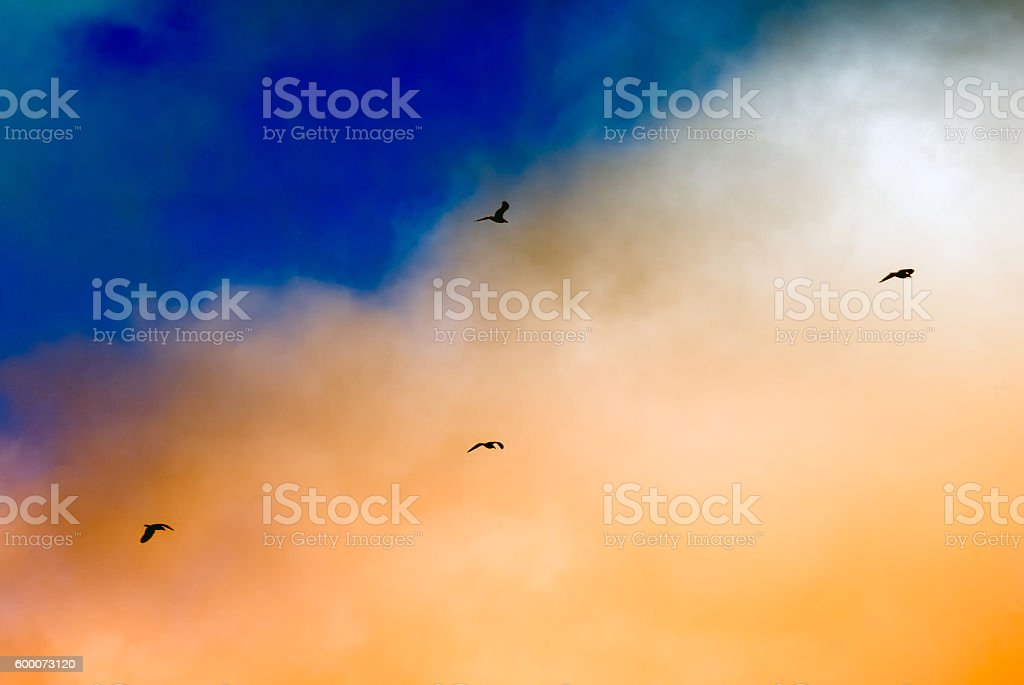 Seagulls silhouettes flying under sunset beautiful clouds stock photo