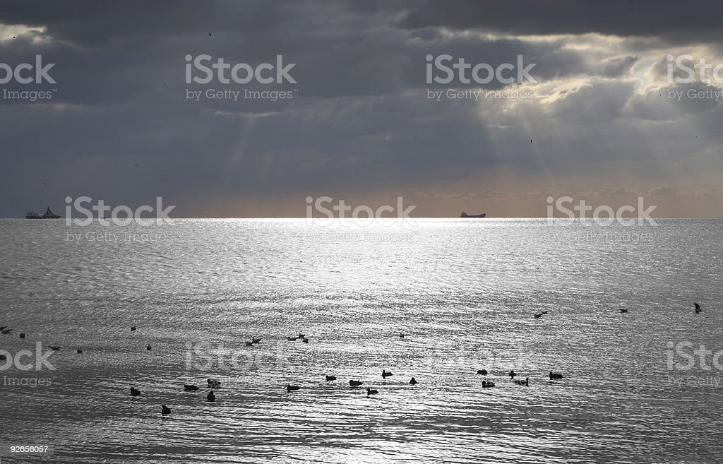 seagulls silhoutte royalty-free stock photo