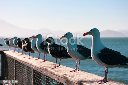 Seagulls sitting on barrier in San Francisco pier, July 2019