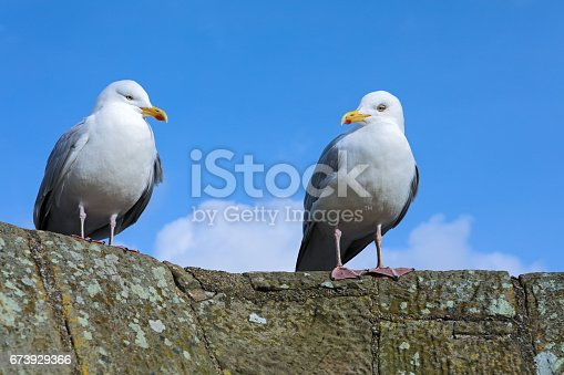 Seagulls sitting on the tower of an ancient castle