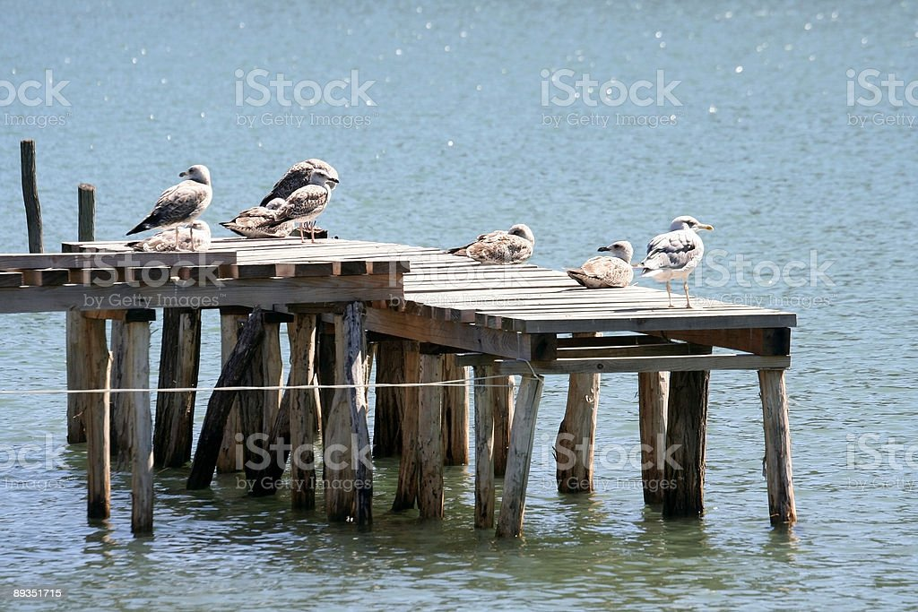 Seagulls sitting royalty-free stock photo