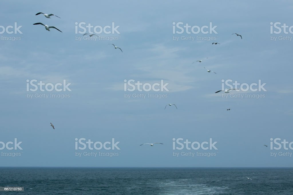 Seagulls soar over mouth of the Delaware River. stock photo