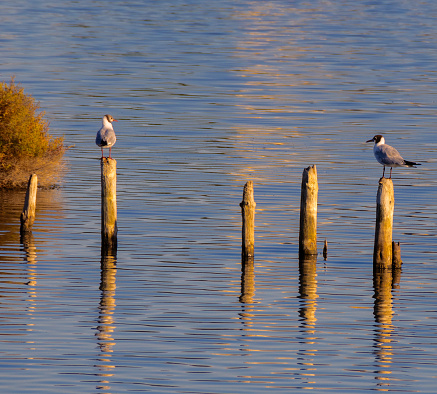 seagulls standing on wooden polls over the sea