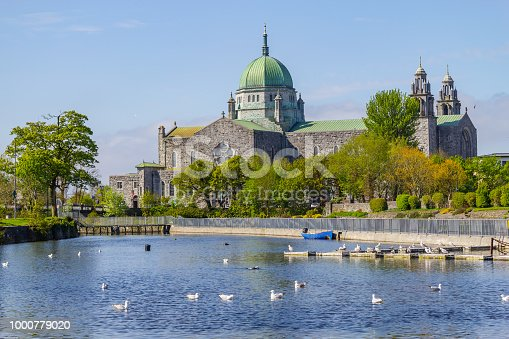Seagulls swimming in Corrib river and Galway Cathedral in background, Galway, Ireland