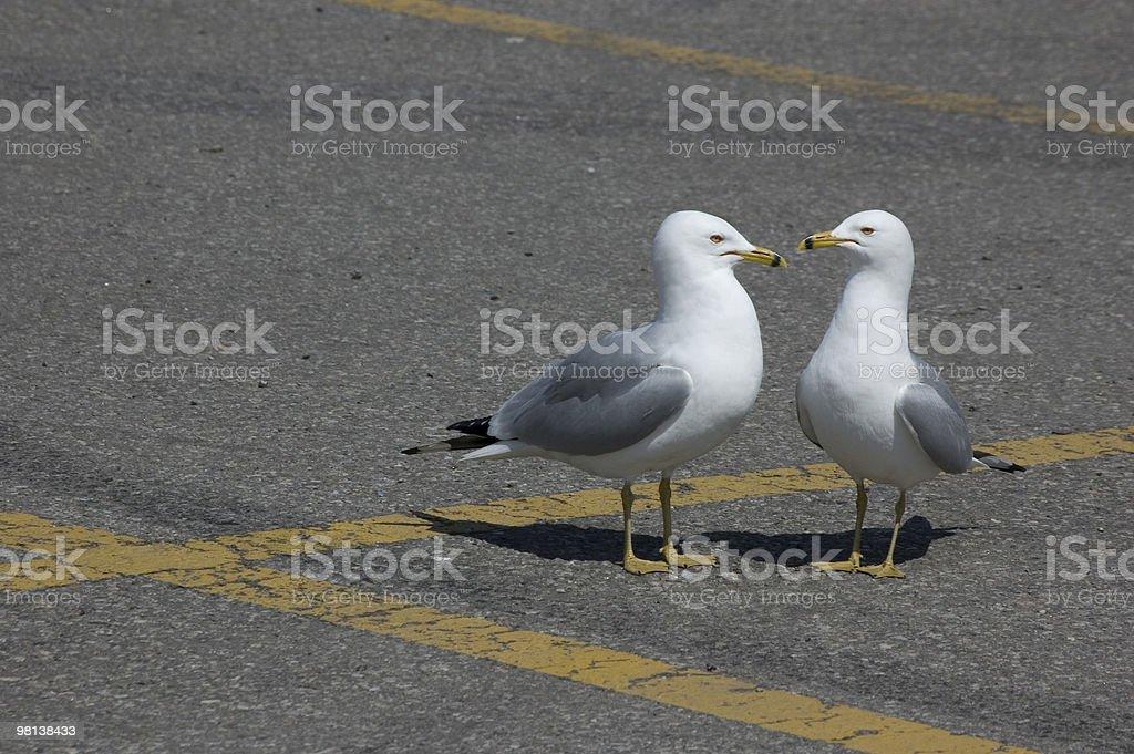 Seagulls, Talking royalty-free stock photo