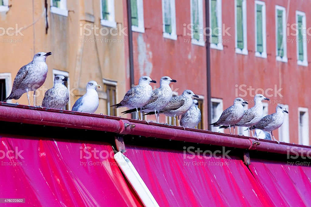 Seagulls waiting for food stock photo