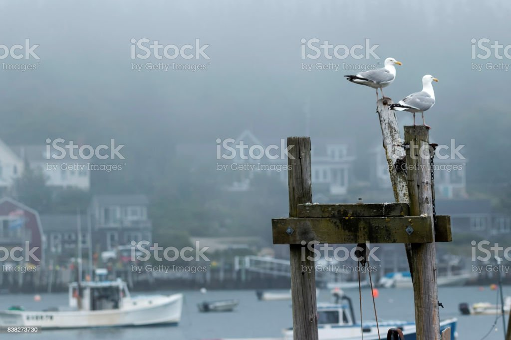 Seagulls watching over a harbor in Maine stock photo