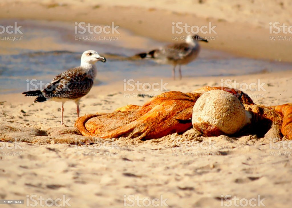 Möwen Wal Kadaver Knochen Cape Cod National Seashore Strand Stock ...