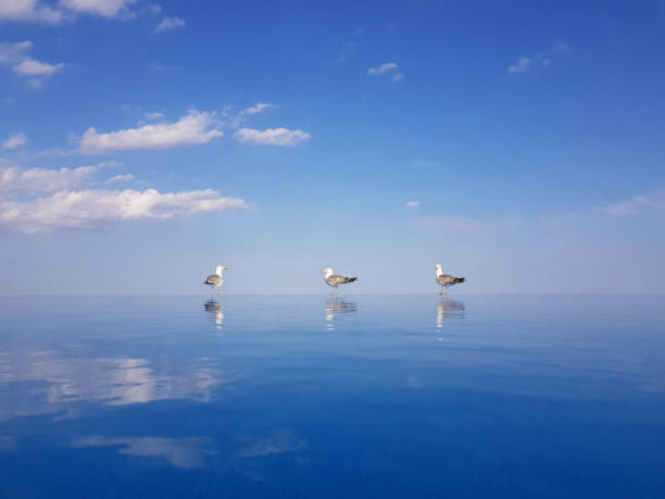 Seagulls with Water Reflections on the Edge of a Pool stock photo