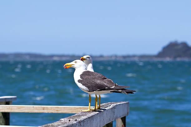 Seaguls – Foto