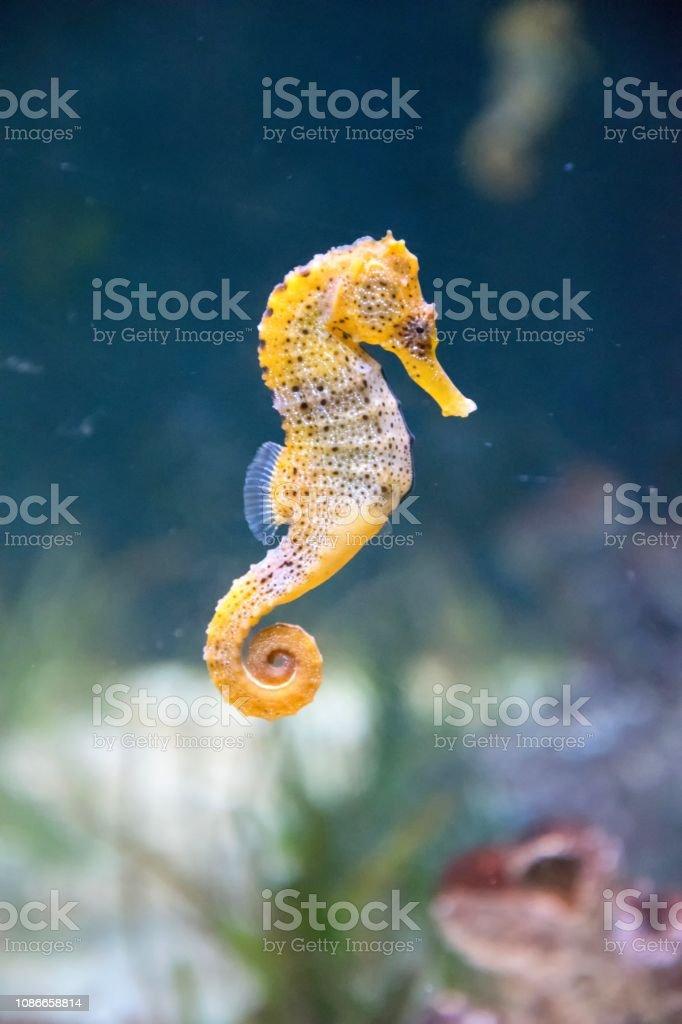 Seahorse Stock Photo Download Image Now Istock