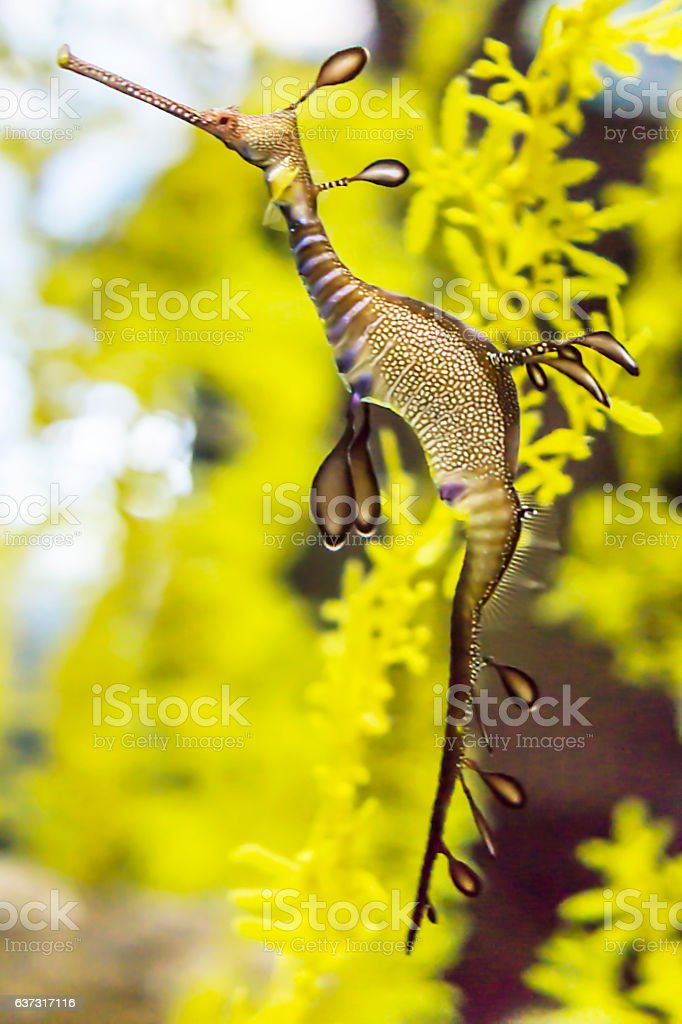 Seahorse stock photo