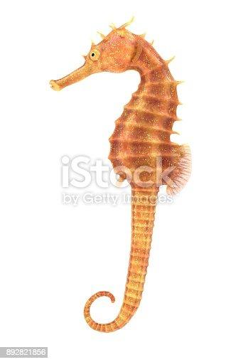 istock Seahorse 892821856