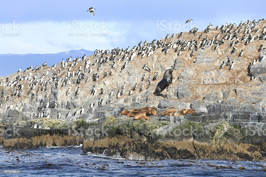 Seal and bird in Beagle Channel, Ushuaia, Argentina stock photo