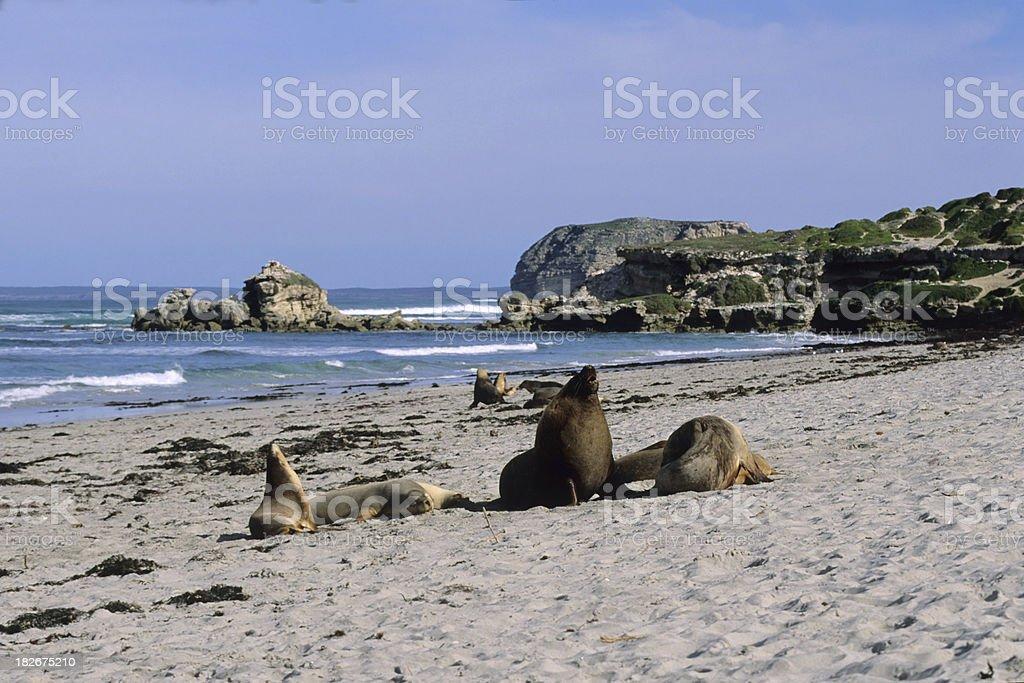Seal Bay, Kangoroo Island stock photo