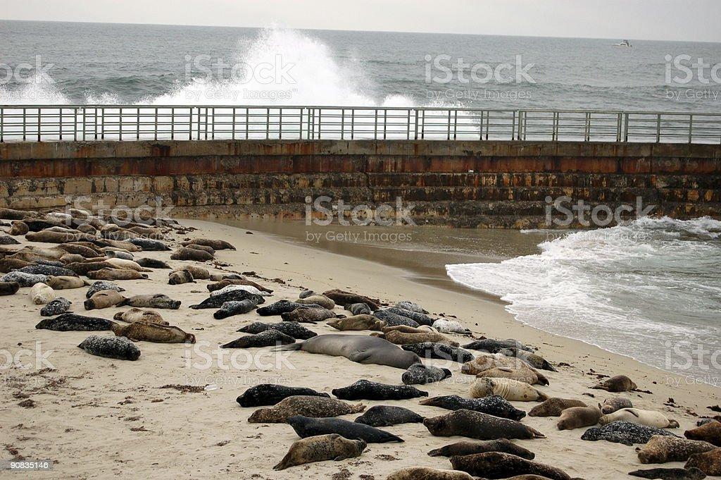 Seal Bay royalty-free stock photo