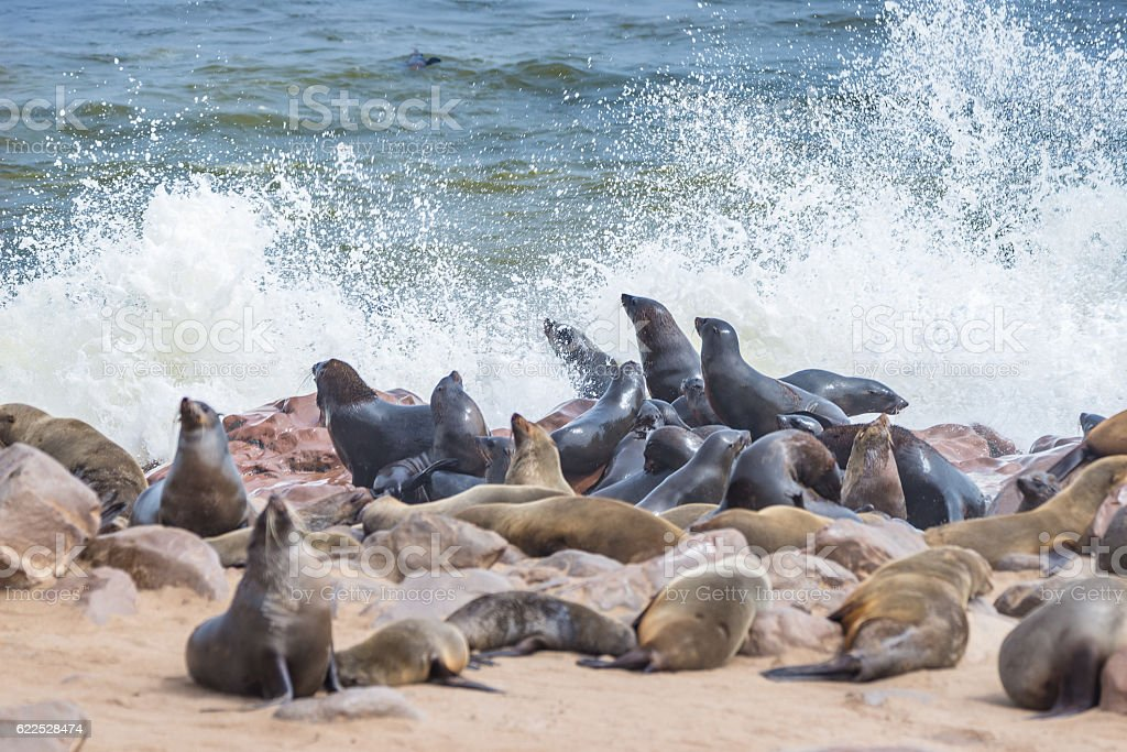 Seal colony at Cape Cross in Namibia, Africa stock photo