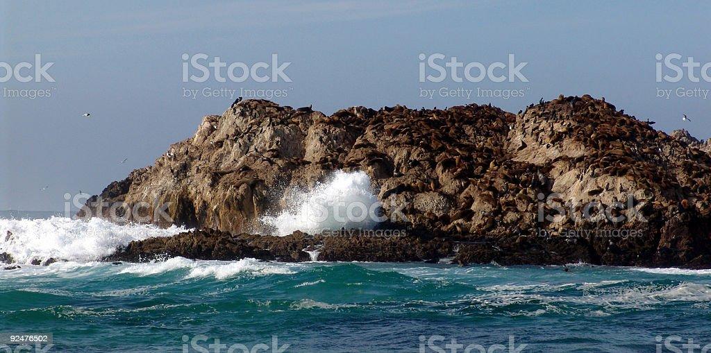 Seal Island royalty-free stock photo