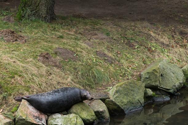 Dichtung liegt auf den Steinen am Ufer – Foto