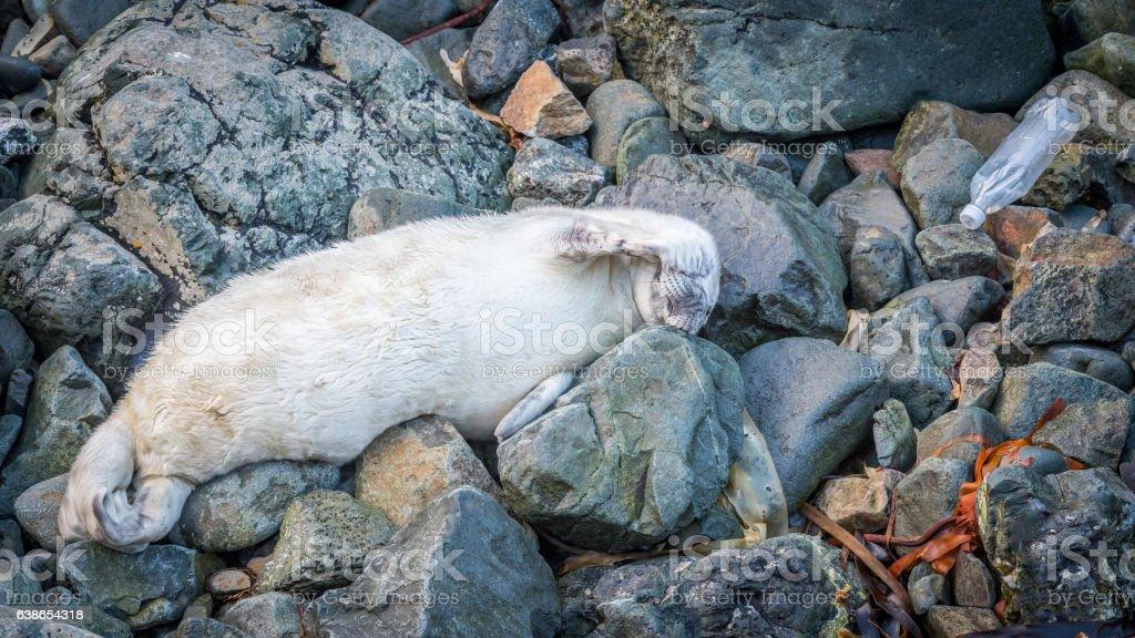 Seal Marine plastics stock photo