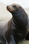 A Sea Lion at La Jolla Cove.