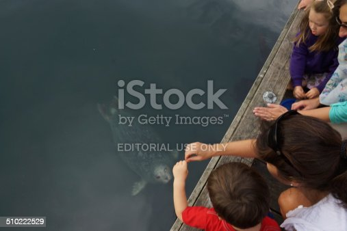 Victoria, Canada - July 2, 2014: the photo was taken at BC Victoria harbor with children trying to feed the sea lion