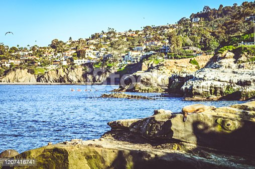 A seal rests on a high rock with scenic La Jolla cliffs in the background. Classic beautiful California coastline