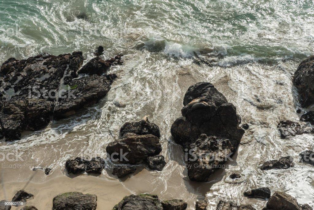 Seals at Point Dume, Malibu, California stock photo