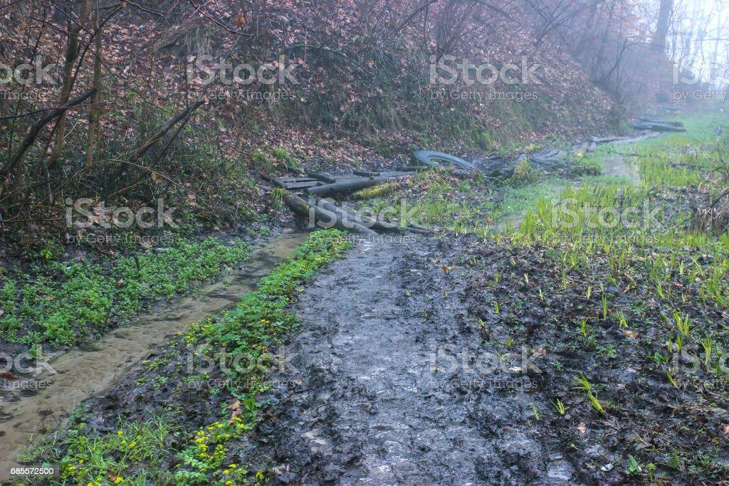 農村的路徑附近樹上的密封件廠 免版稅 stock photo