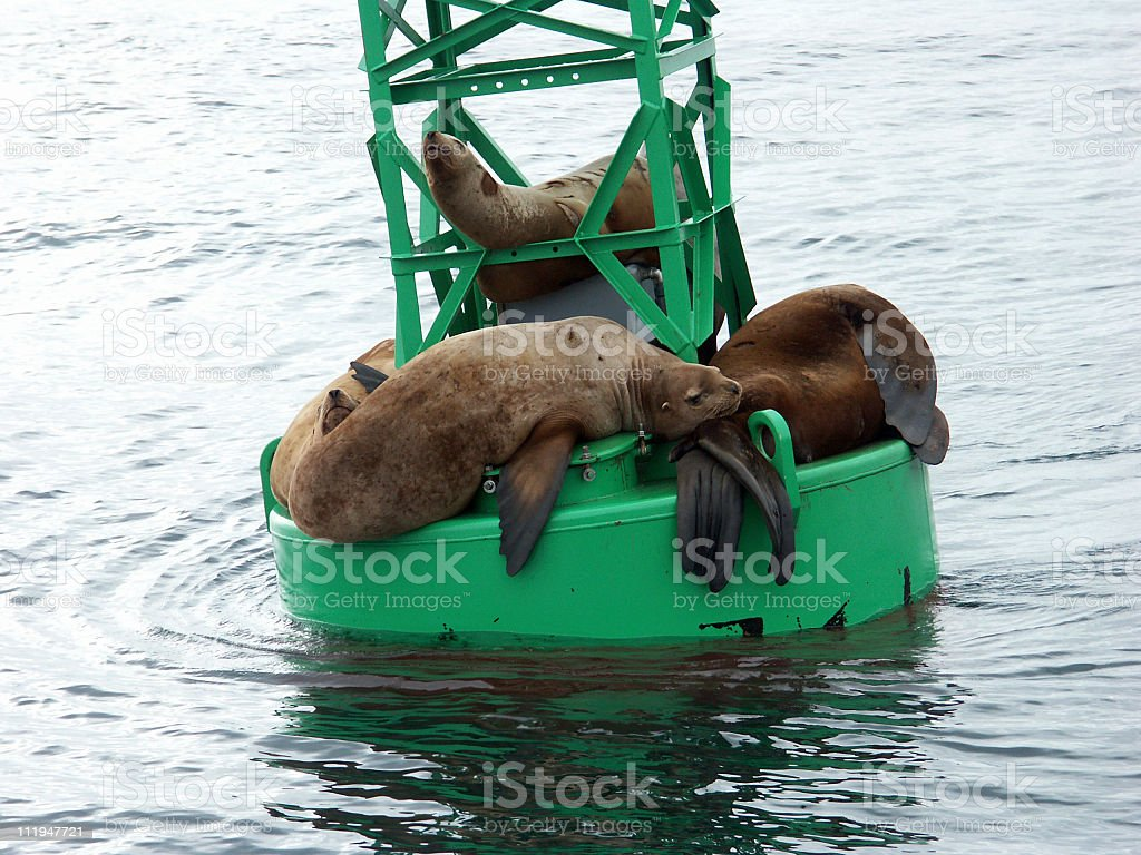 Seals resting on buoy in Prince William Sound,Alaska stock photo