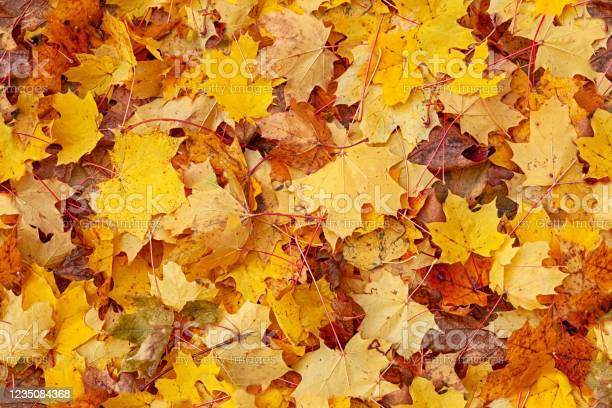 Photo of Seamless autumn leaves background