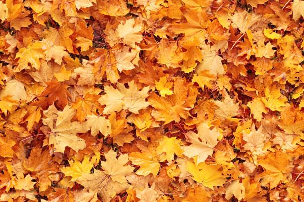 Nahtlose Herbst Blätter Hintergrund – Foto