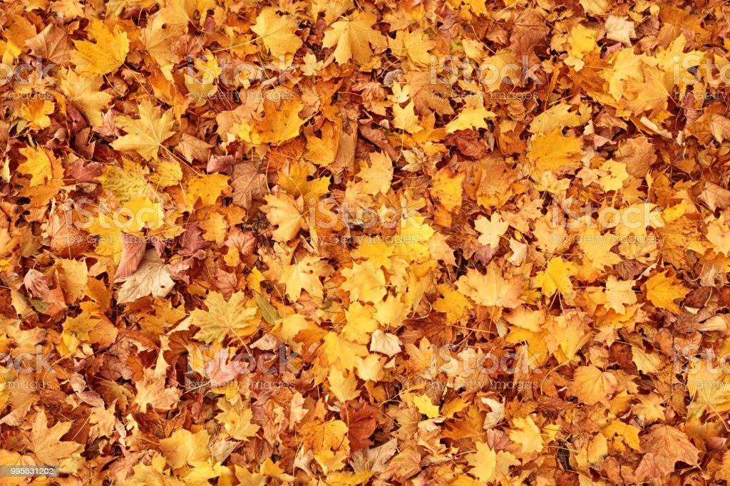 Seamless autumn leaves background - Royalty-free Alemanha Foto de stock